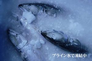 ブライン氷で凍結中