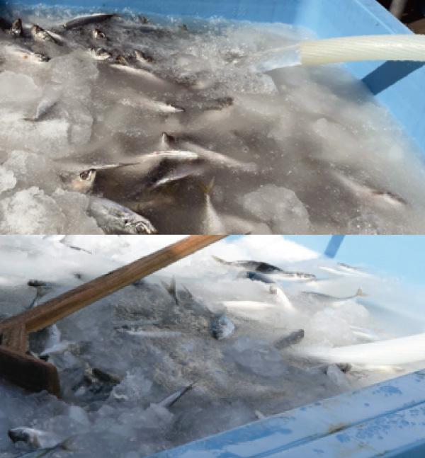 海水シャーベット製造装置の写真