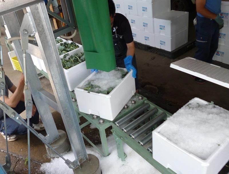 ブロッコリーにフレーク氷を詰める様子の写真